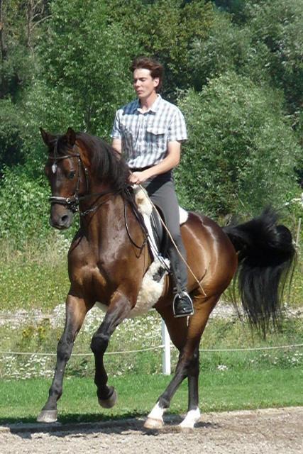 Krátce o vztahu člověka s koněm