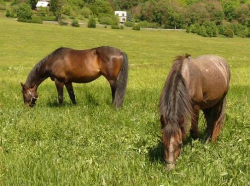 Jak nás vnímají koně, aneb trocha filosofie