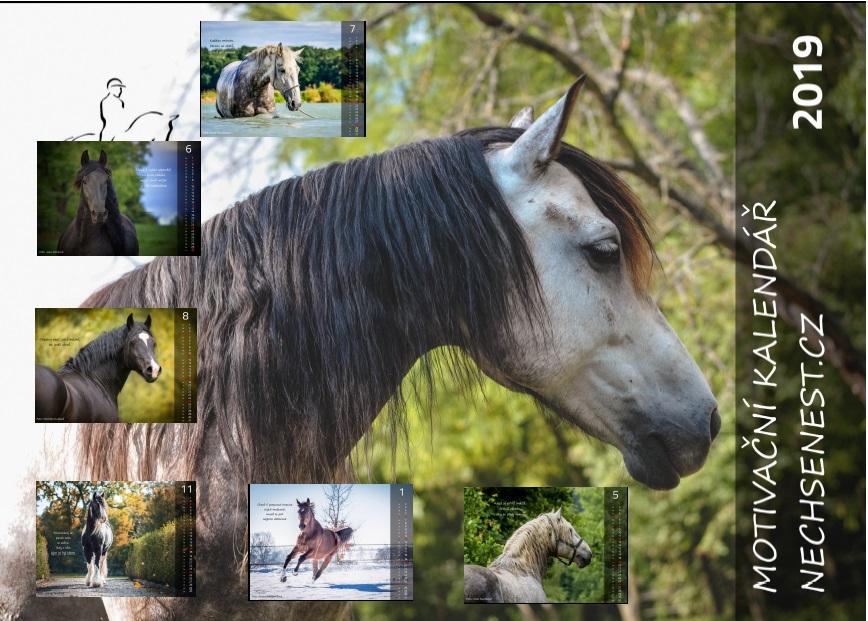 Motivační kalendář 2019 vytěžil 8 700 Kč pro Domov pro koně