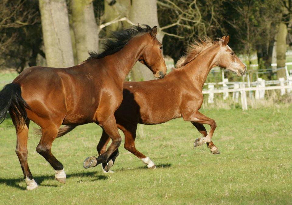 Waldemar Seuing o výběru koně