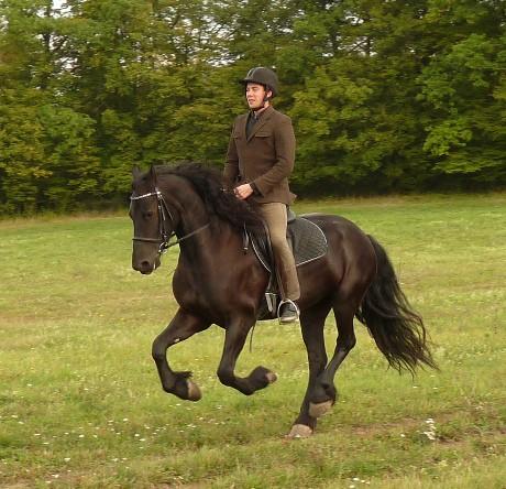 Uvolnění, opracování, pozornost a reaktivita koně