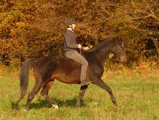 Jak se chovat v terénu – návod pro koně